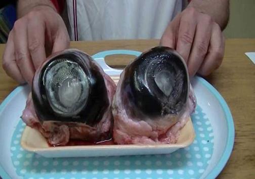 چشم ماهی تن