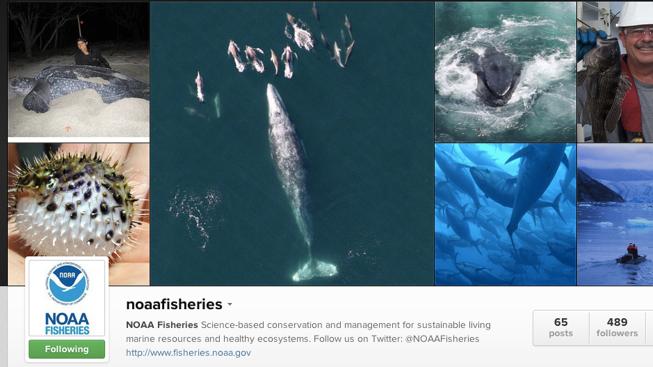 NOAAfisheries@ اکانت اینستاگرام معروف