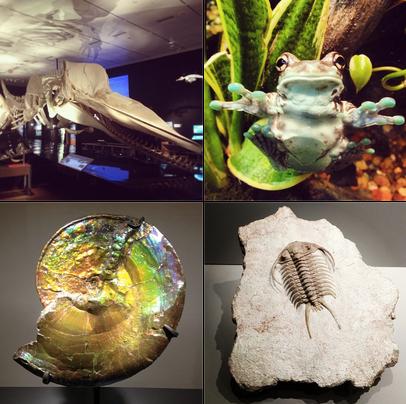 اکانت محبوب اینستاگرام شب در موزه