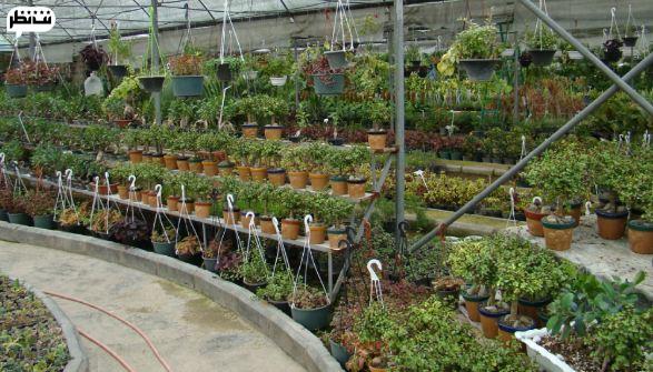 بازار گل و گیاه شهید فکوری بهترین بازار گل و گیاه تهران