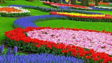لیست بهترین بازار گل و گیاه تهران