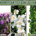 ۵ گیاه برای بهتر خوابیدن