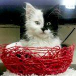چند نکته مهم برای نگهداری از گربه