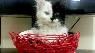 نکات مهم برای نگهداری از گربه