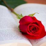 بهترین رمان های عاشقانه جهان
