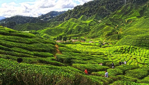 مناظر زیبای مالزی