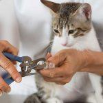 کوتاه کردن ناخن گربه به صورت اصولی و با ناخن گیر مخصوص