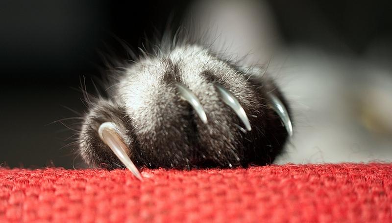 [عکس: cat-nails.jpg]