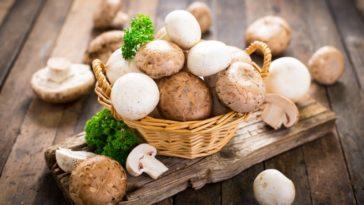 روش پرورش قارچ در ایران