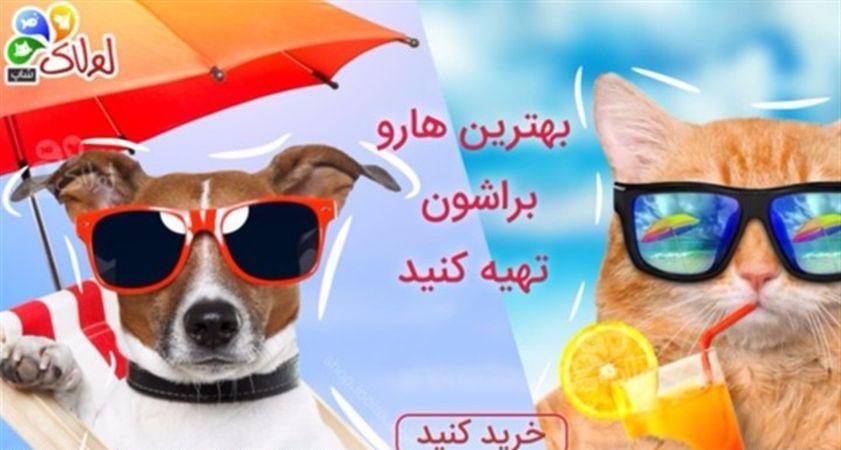 پت شاپ لولاک بهترین پت شاپ اینترنتی در تهران