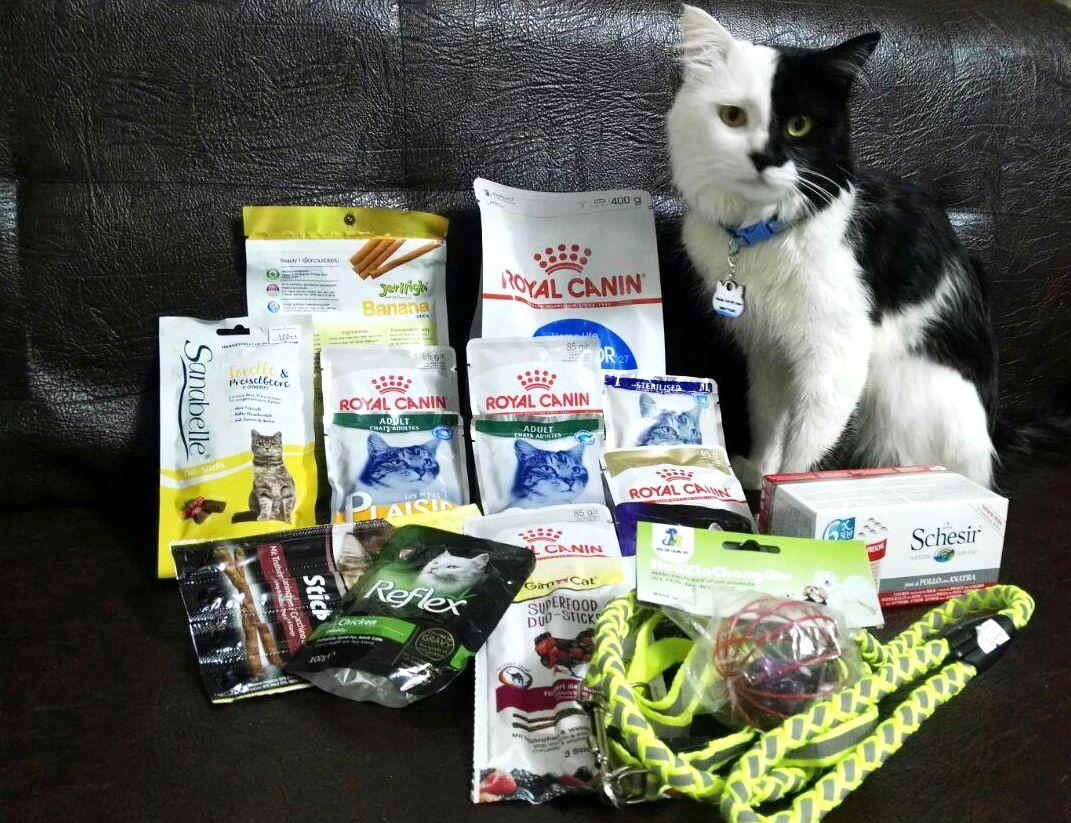 معرفی بهترین برند غذای گربه