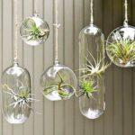 بهترین-گیاهان-آپارتمانی