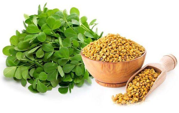 دانه شنبلیله یکی از گیاهان موثر در رشد سینه ها