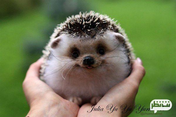 زیباترین حیوانات دنیا