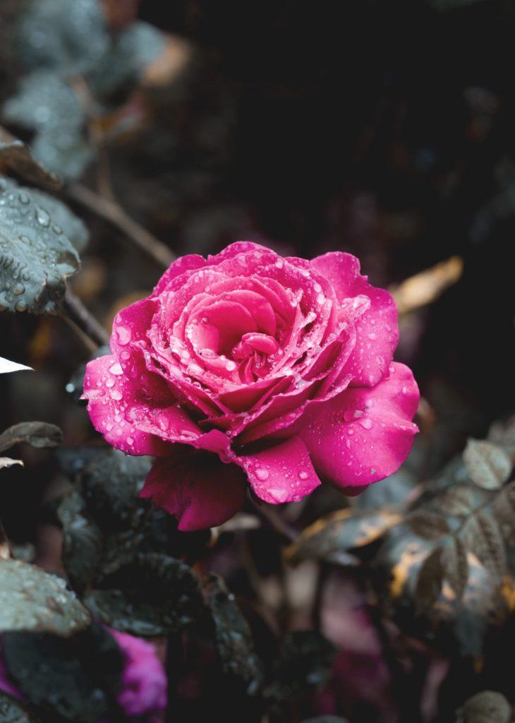 زیبایی در قرآن کریم